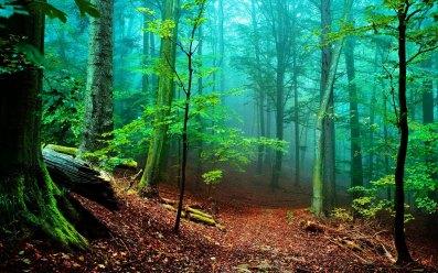 forest-fog-1920x1200-de-paseo-por-el-bosque